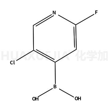 2-氟-5-氯吡啶-4-硼酸